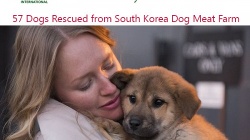 Humane Society International rescued 57 dogs from a dog meat farm in South Korea