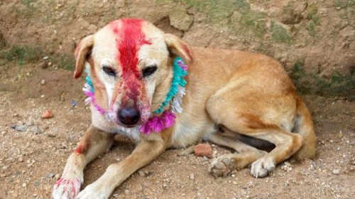 The bridegroom turned out to be a stray dog!