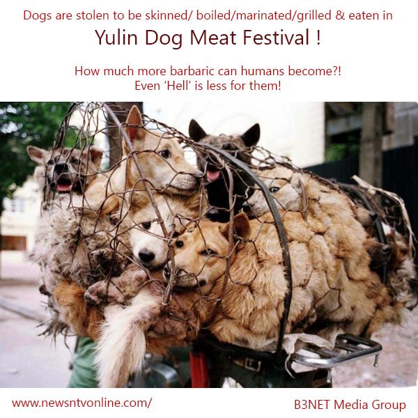 dogs-yulin